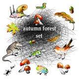 Ensemble graphique de vecteur de forêt d'automne Photo stock