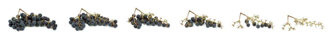 Ensemble mûr savoureux de composition en raisins d'isolement sur le blanc Photo stock