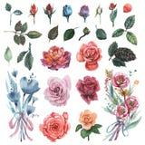 Ensemble peint à la main d'aquarelle de fleurs d'isolement sur le fond blanc Photographie stock libre de droits