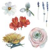 Ensemble peint à la main d'aquarelle de fleurs, d'isolement sur le fond blanc Images libres de droits