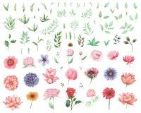 Ensemble peint à la main d'aquarelle de fleurs et de feuilles d'isolement sur le fond blanc Images stock