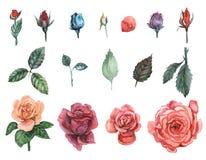 Ensemble peint à la main d'aquarelle de roses d'isolement sur le fond blanc Image stock
