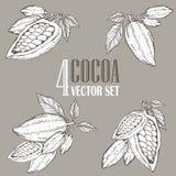 Ensemble peint à la main d'illustration de botanique de cacao Griffonnages décoratifs de nourriture nutritive saine Photos stock
