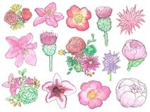 Ensemble peint à la main de Wildflower d'aquarelle d'isolement illustration stock