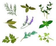 dirigez le persil le thym le romarin et les herbes frais de basilic aromatique illustration. Black Bedroom Furniture Sets. Home Design Ideas