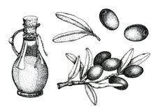 Ensemble réaliste d'illustration de branche d'olives noires et vertes d'isolement sur le fond vert Conception pour l'huile d'oliv illustration libre de droits