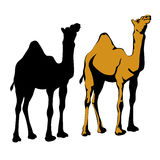 Ensemble réaliste de noir de silhouette de chameau Photographie stock libre de droits