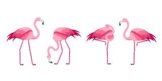 Ensemble rose d'oiseau de flamant de bande dessinée Vecteur illustration stock