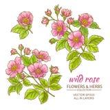 Ensemble rose de vecteur de fleurs de chien Image stock