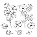 Ensemble stylisé d'images de fleurs blanches de coton Illustrations de vecteur r?gl?es Usine de fleur de coton, capsule pelucheus illustration libre de droits