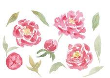 Ensemble tiré par la main d'aquarelle de fleurs et de feuilles de pivoine illustration libre de droits
