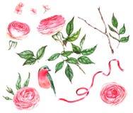Ensemble tiré par la main d'aquarelle d'illustrations florales - roses, feuilles, branche, oiseau illustration libre de droits
