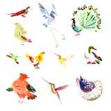 Ensemble tiré par la main d'oiseau d'aquarelle illustration de vecteur