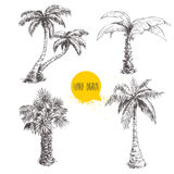 Ensemble tiré par la main de croquis de palmiers Illustration de vecteur sur le fond blanc Photo stock