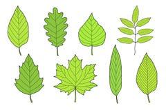 Ensemble tiré par la main de feuilles vertes Photos libres de droits