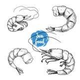 Ensemble tiré par la main de fruits de mer de style de croquis Shripms, vecteur de collection de crevettes roses Photo libre de droits