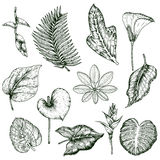 Ensemble tiré par la main de monochrome de plantes tropicales illustration libre de droits
