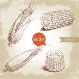 Ensemble tiré par la main de style de croquis de légume de maïs Images stock