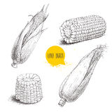 Ensemble tiré par la main de style de croquis de légume de maïs Images libres de droits