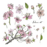 Ensemble tiré par la main réaliste de Sakura avec des bourgeons, fleurs, feuilles, branche Illustration colorée de style de vinta illustration stock