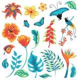 Ensemble tropical illustration stock