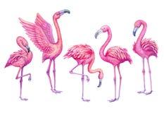 Ensemble tropical d'aquarelle de flamant Illustration exotique d'oiseaux de paradis Image libre de droits