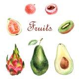 Ensemble tropical d'aquarelle de fruits sur un fond blanc illustration libre de droits