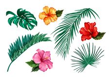Ensemble tropical de ketmie de paume de monstera de feuille de vecteur illustration stock