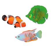 Ensemble tropical de poissons de mer de Motley d'isolement sur le fond blanc illustration libre de droits