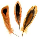 Ensemble vibrant de plume d'aquarelle tirée par la main plume d'illustration avec des rayures et des taches Sur le blanc Concepti Photographie stock