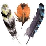 Ensemble vibrant de plume d'aquarelle tirée par la main Style de plume de Boho plume d'illustration D'isolement sur le blanc Conc Photos libres de droits
