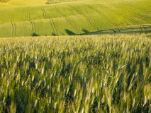 Ensembles de Sun au-dessus des terres cultivables toscanes Photographie stock libre de droits