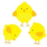 Ensembles mignons de poulet Photo stock
