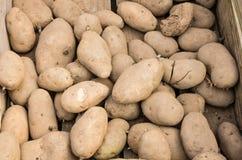 Ensembles ou débuts de pomme de terre prêts à planter images stock