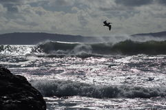 Ensenada墨西哥海洋路辗挥动鹈鹕云彩山海岛 免版税库存照片