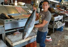 Ensenada, Mexico-August 5, 2014-Fisherman displaying his catch in a market Royalty Free Stock Images