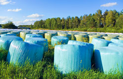 Ensilage. Images stock