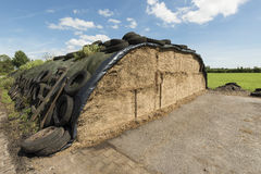 Ensilage on a dairy farm. Traditional Dutch ensilage on a dairy farm in the North of the Netherlands royalty free stock photo