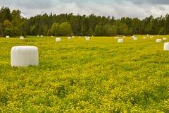 Ensilage emballé sur la campagne Paysage vert et jaune photo libre de droits