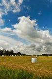 Ensilajes en el prado. Imagen de archivo