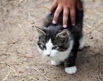 Ensine crianças amar animais Imagens de Stock