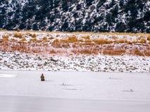 Enslig isfiskare Kneeling på is Arkivfoto