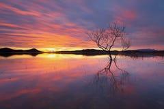 enslig solnedgångtree Royaltyfri Bild