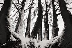 Enslig trädstam i vinter, snöig landskap med snö och dimma, dimmig skog i backgrouden, konstsikt, Europa Arkivbild