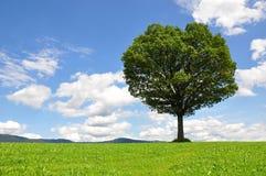 enslig tree Arkivfoto