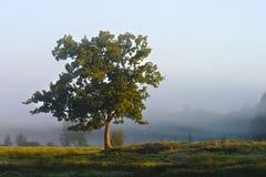 enslig tree Royaltyfria Bilder