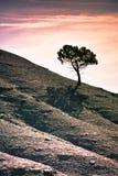 enslig tree Royaltyfri Foto