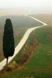 Ensligt cypressträd med grus rad i morgondimma, Tuscany, Italien arkivfoto