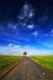 Ensligt orange kastanjebrunt träd under höst Träd i ängen, med mörker - blå himmel med vita moln Väg mellan gröna ängar royaltyfri bild