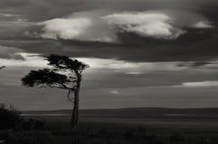 Ensligt träd Fotografering för Bildbyråer